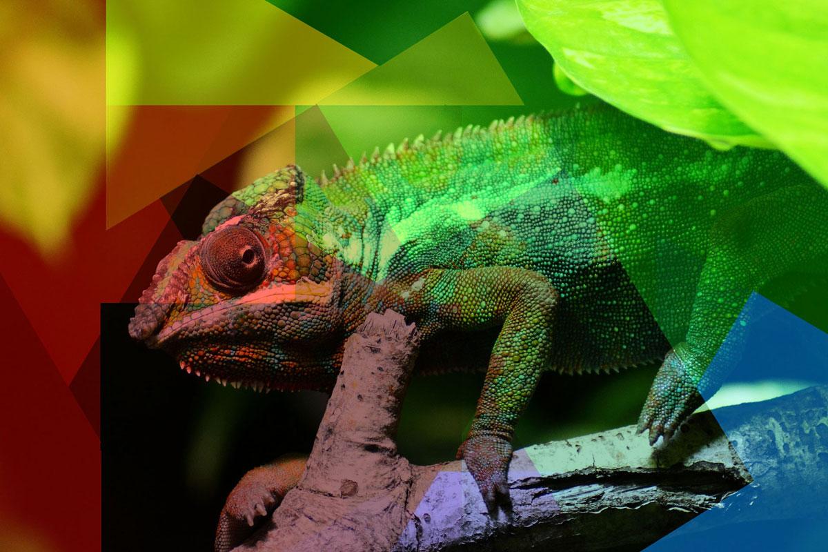 bannerchameleon_color
